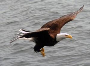 Eagle Nook